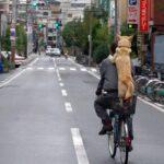 Rad & Hund: 5 Lösungen für Hundetransport mit oder am Fahrrad