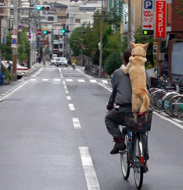 Rad Hund 5 Lösungen Für Hundetransport Mit Oder Am Fahrrad